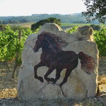 Cavalli e vigne