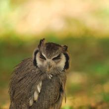 Bird Watching nei dintorni di Mille Primavere